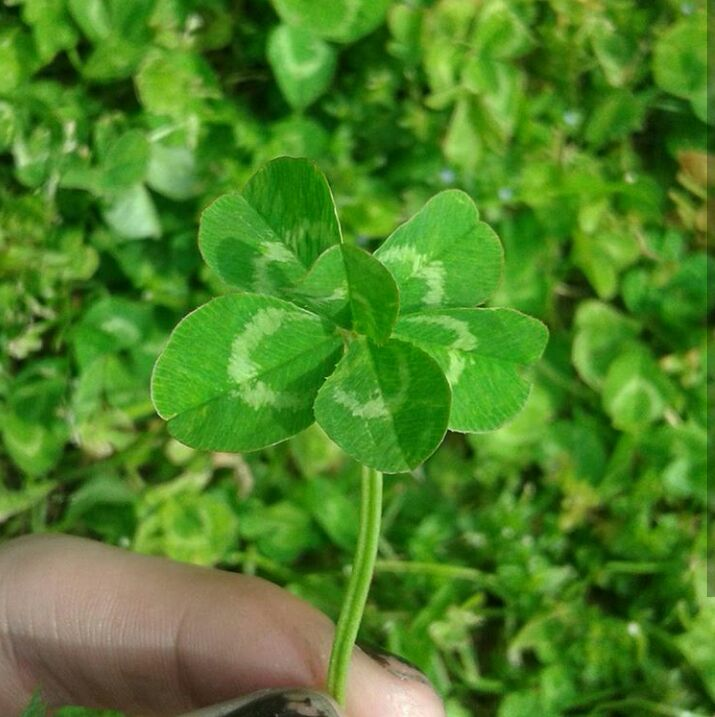 As a Clover Hunter, I'd like to share some luck